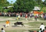 Bullfight_znz